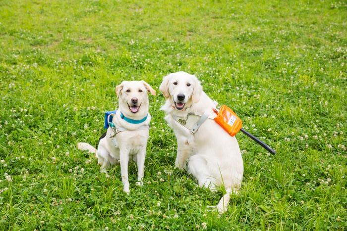 盲導犬を身近な存在に 普段の暮らしや訓練、サポートの様子をオンラインで紹介