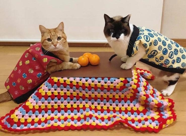 「猫と、こたつと、思い出みかん」 猫専用こたつが付いた和歌山のみかんセット