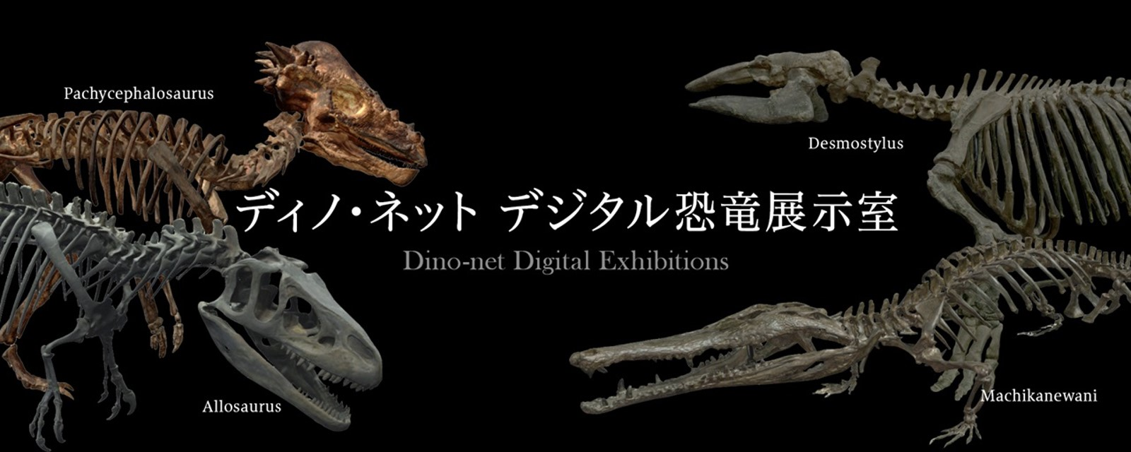 おうちで博物館! 日本各地の恐竜骨格をVRで見学 国立科学博物館のデジタル恐竜展示室