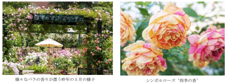 練馬のローズガーデン、リニューアルオープン 春から秋まで咲き続けるバラ「四季の香」も解禁