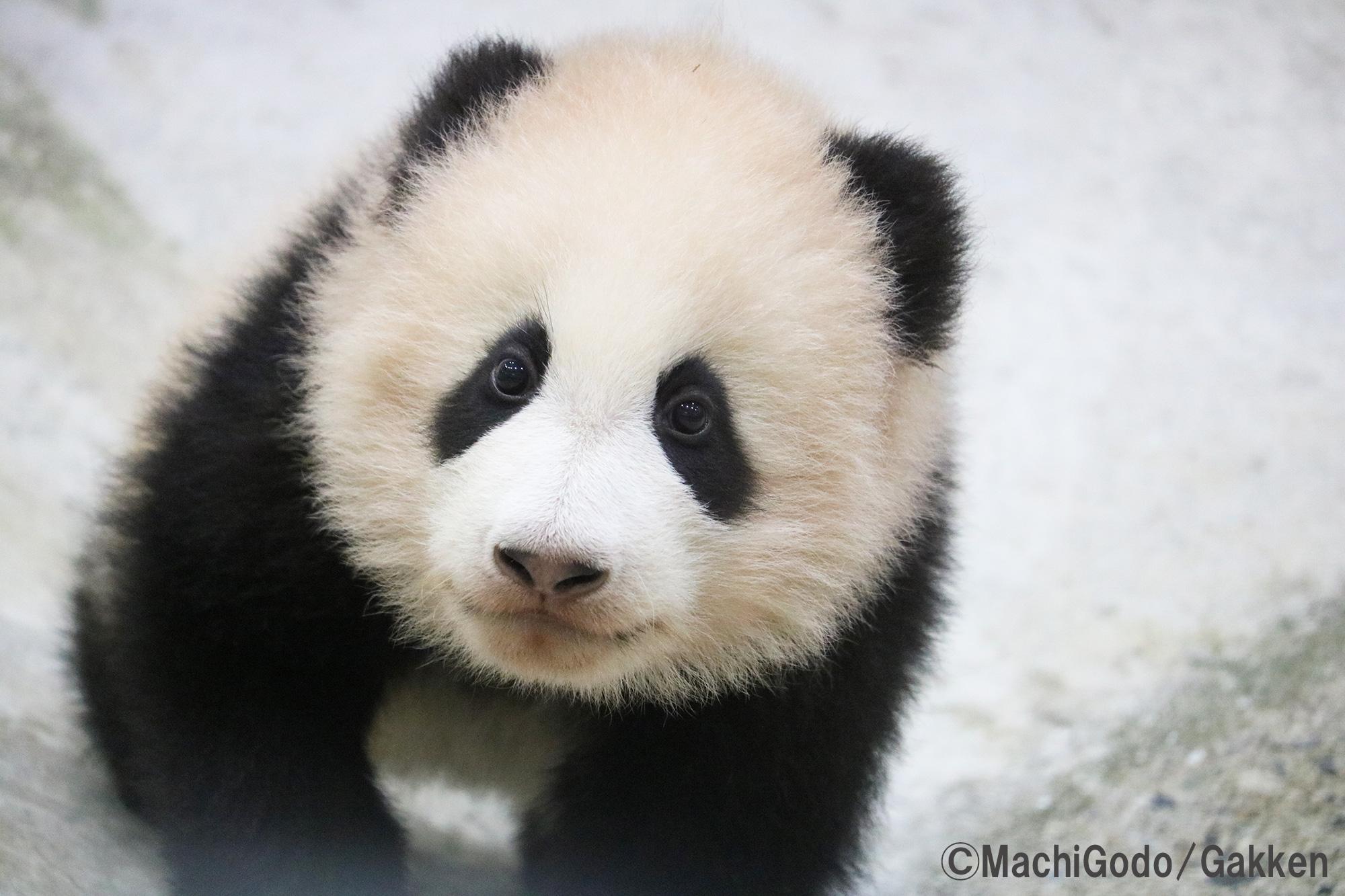 まるまる一冊パンダだらけ 親子で楽しむパンダ図鑑